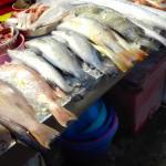 Frischer Fisch